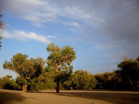 新闻名称:额济纳旗旅游添加日期:2009-09-20 21:52:30浏览次数:4415